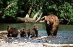 Медведи на Русском фронте